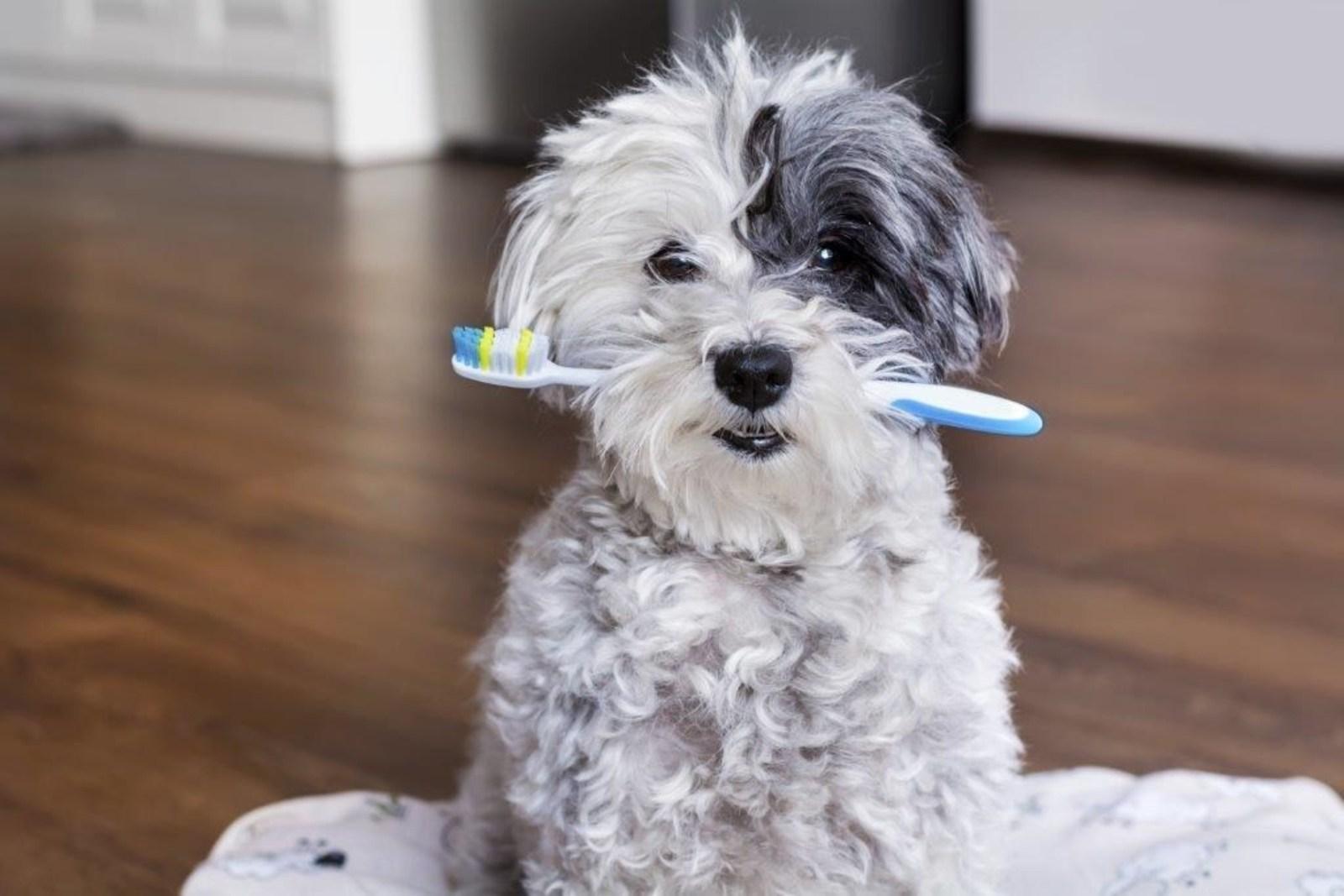 PetFirst Pet Insurance Dental Health Month